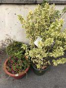 Four plastic pots with various Plants