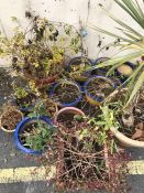 Selection of various pots and plants (14 in total)