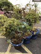 Nine pots containing various plants