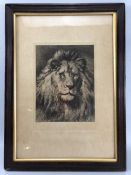 """Herbert Dicksee - titled """"His Royal Highness"""", etching of a Lion , approx. 18 x 24cm signed """"HD"""""""