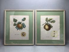 Pair of framed botanical prints 'Albicoca di Germania' and 'Mela Panaja', approx 50cm x 43cm (inclu.