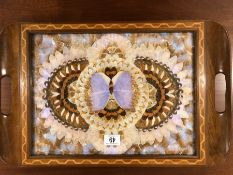 Colourful Butterfly wing tray