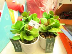 Set of 4 Dunelm Succulent Artificial Plants In Ceramic Pots. New with tags