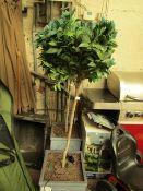 Costco Bay tree in Pot. 160cm Tall. RRP £60