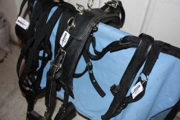 Set of webbing pony harness