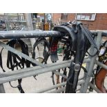 Set of webbing pony harness to suit 11 to 12hh.