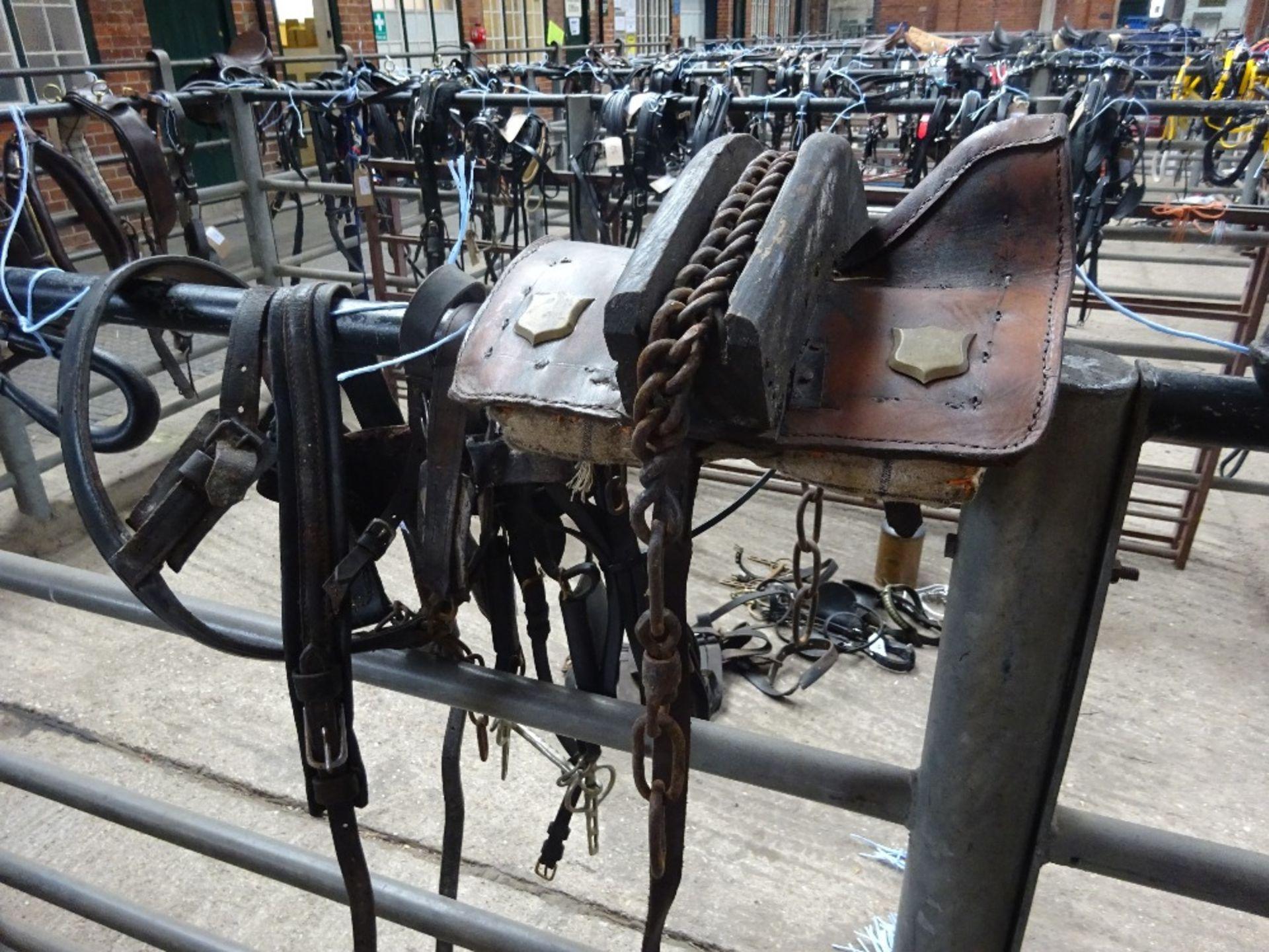 Set of donkey harness. - Image 3 of 3