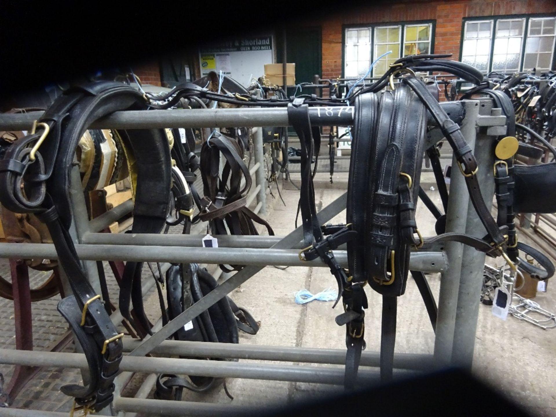 Set of English trap harness. - Image 4 of 4