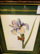 Set of nine framed and glazed French botanical prints.