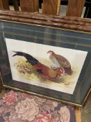 Set of four framed and glazed bird prints, and seven others.