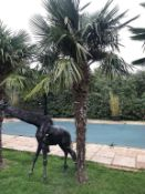 1 x Palm Tree - Approx 4-Metres in Height - Ref: JB156 - Pre-Owned - NO VAT ON THE HAMMER - CL574 -