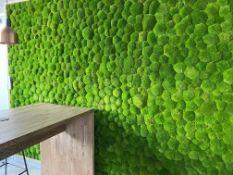 Real Life Moss Wall