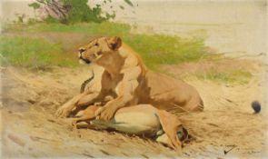Wilhelm KuhnertLöwin mit erlegter Gazelle