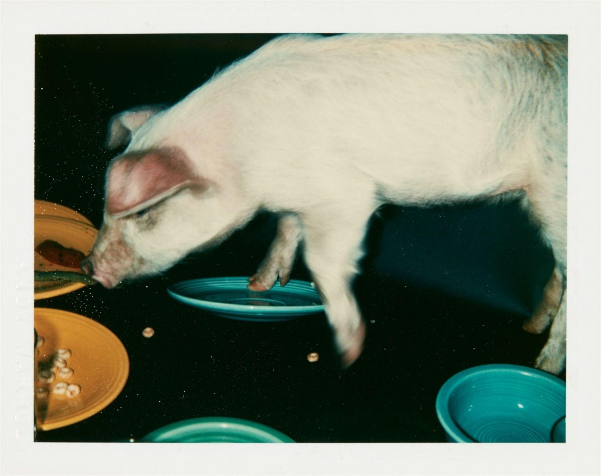 Andy WarholFiesta Pig