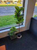 Pair of Decorative Plants