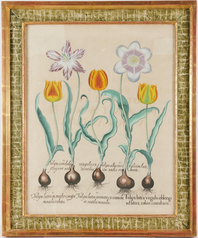 Lot 6 - Basilius Besler, (2) Engravings