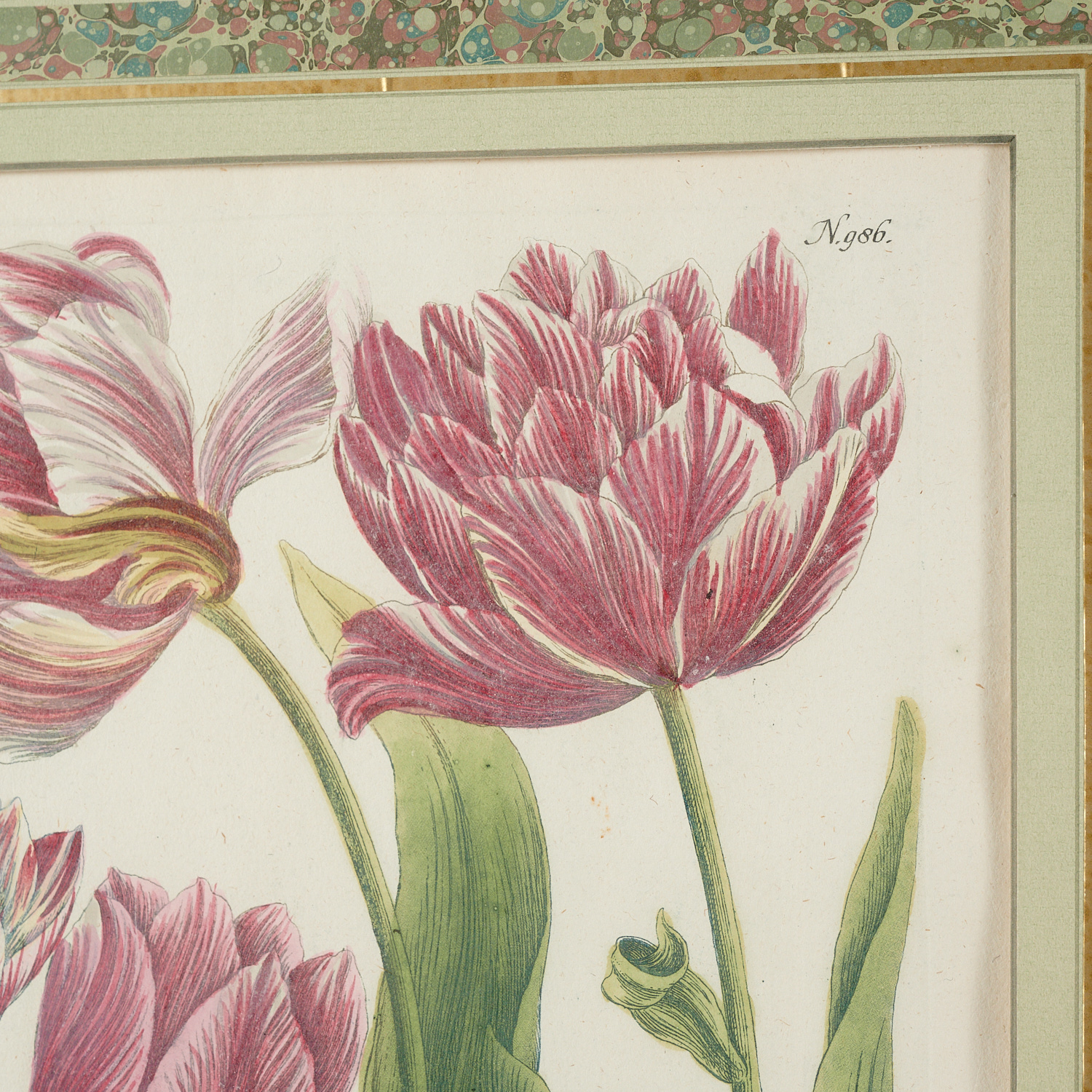 Lot 13 - Johann W. Weinnmann, (6) Botanical Engravings