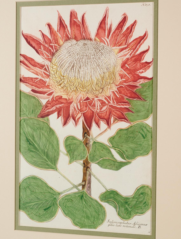 Lot 16 - Johann W. Weinnmann, (6) Botanical Engravings