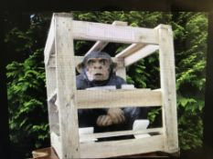 CRATED MONKEY STATUE