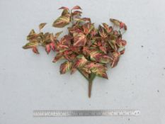 5 x Artificial Coleus bush - Very retro