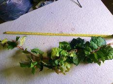 100 Pieces of artificial Grape vine bush used