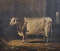 "After Percy Forster (19th Century) British. ""Portrait of the Short Horned Cow, Bracelet"", Print,"