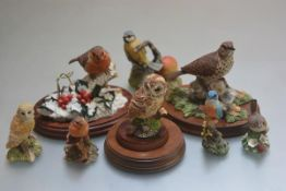 A group of Border Fine Arts composition figures including a Tawny Owl, a Song Thrush, Winter Friend,