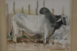 Margaret Mitchell, Brahmin Bull, watercolour, signed, paper label verso, ex Carlton Gallery,