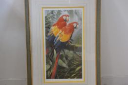 Adrian C Rigby, Ara Macao Scarlet Macaw, a pair of macaws in tropical setting, limited edition print