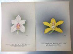 Nellie Roberts (British 1872-1959), Studies of Orchids, a Pair, Cymbidium Lucastes Brockhurst and