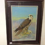 •Ralston Gudgeon R.S.W. (Scottish, 1910-84), Peregrine Falcon, watercolour and gouache, signed lower