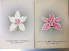 Nellie Roberts (British 1872-1959), Studies of Orchids, a Pair, Cymbidium Louis Sander Ulysses and