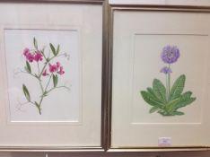 """Kathy Pickles (British, 20th Century), a pair of Botanical Studies, one bearing label """"Lathyrus"""