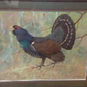 •Ralston Gudgeon R.S.W. (Scottish, 1910-84), Capercaillie, watercolour and gouache, signed lower