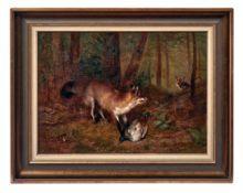 Fuchs verteidigt seine erbeutete Wildente im Wald