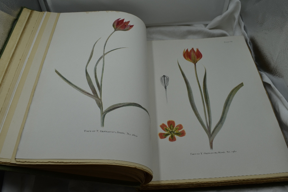 Lot 430 - Botany. Dykes, W. R. & E. K. - Notes on Tulip Species. London: Herbert Jenkins, 1930. Illustrated