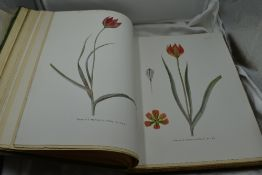 Botany. Dykes, W. R. & E. K. - Notes on Tulip Species. London: Herbert Jenkins, 1930. Illustrated