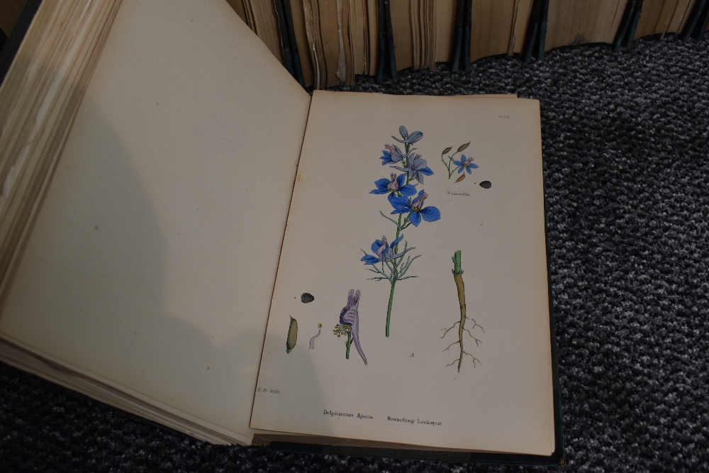 Lot 441 - Natural History. Sowerby, John Edward et al. - English Botany; or, Coloured Figures of British