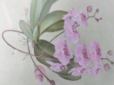 A watercolour, A Shelley Lloyd, Phalaenopsis, still life, signed, framed and glazed, 50 x 37cm