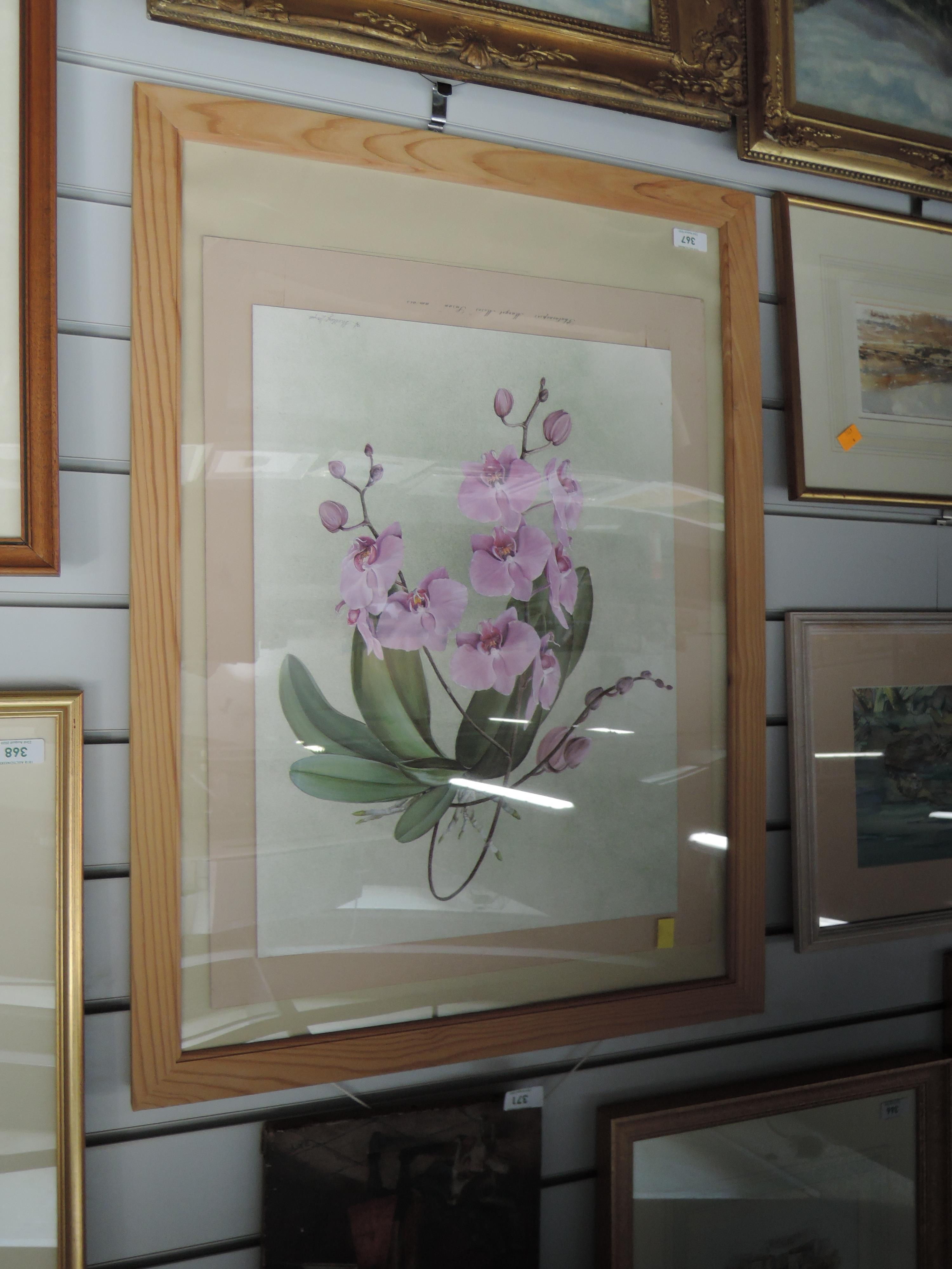 Lot 367 - A watercolour, A Shelley Lloyd, Phalaenopsis, still life, signed, framed and glazed, 50 x 37cm