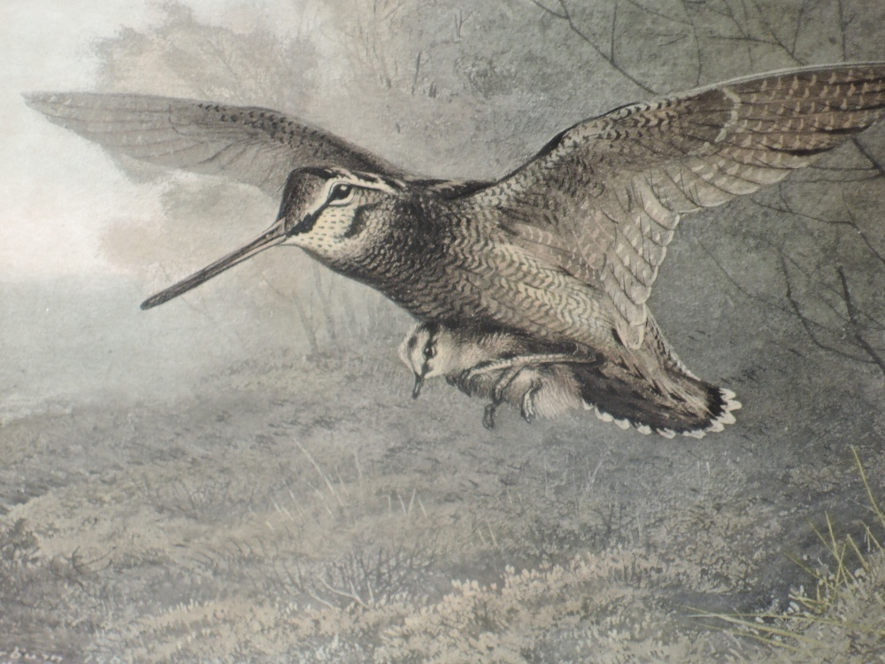 Lot 374 - A pair of prints, after Archibald Thorburn, Hungary Woodcock, and a Labour of Love, framed and