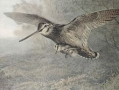 A pair of prints, after Archibald Thorburn, Hungary Woodcock, and a Labour of Love, framed and