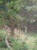 An oil painting, A Oliver, woodland glade with foxgloves, signed, framed and glazed, 73 x 53cm