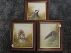 Three oil paintings Mike Nance, Badger, Red Squirrel, and Otter, 24 x 20cm, signed, framed