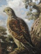 An oil painting on board, George Anderson Short, Peregrine falcon, signed and attributed verso, 40 x