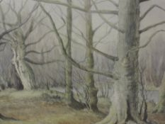 A watercolour, Neil Taylor, woodland scene, signed, 37 x 50cm, framed and glazed
