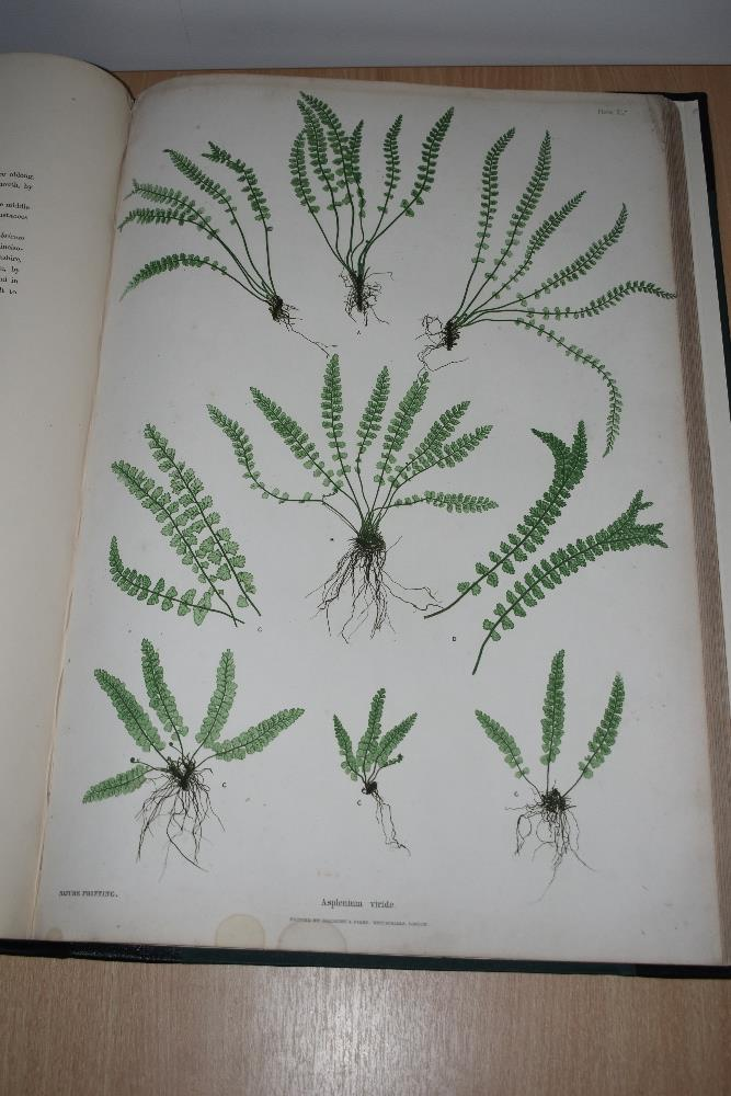 Natural History. Pteridology. Moore, Thomas; Lindley, John (ed.) - The Ferns of Great Britain and - Image 6 of 10