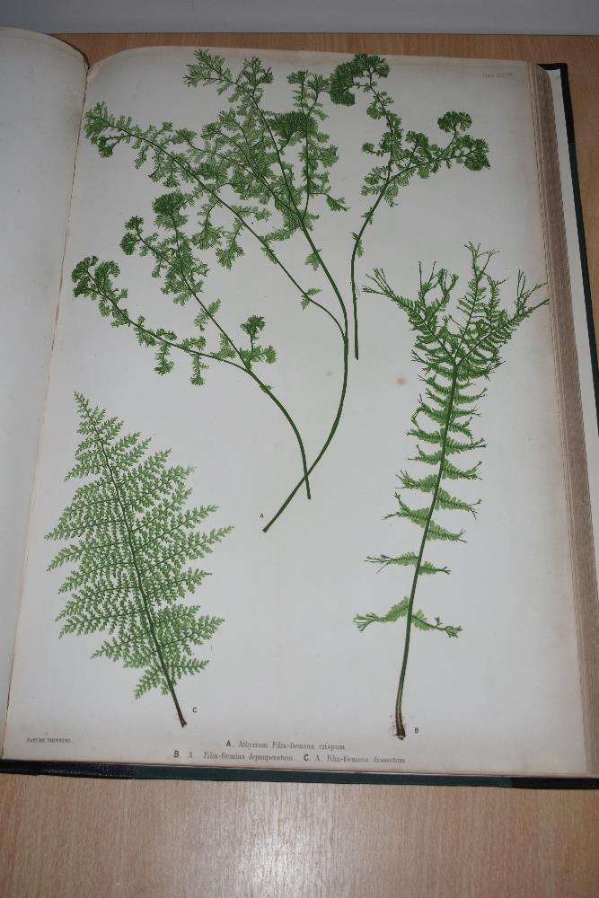 Natural History. Pteridology. Moore, Thomas; Lindley, John (ed.) - The Ferns of Great Britain and - Image 5 of 10