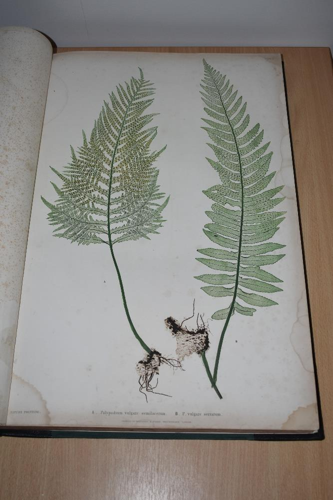 Natural History. Pteridology. Moore, Thomas; Lindley, John (ed.) - The Ferns of Great Britain and - Image 3 of 10