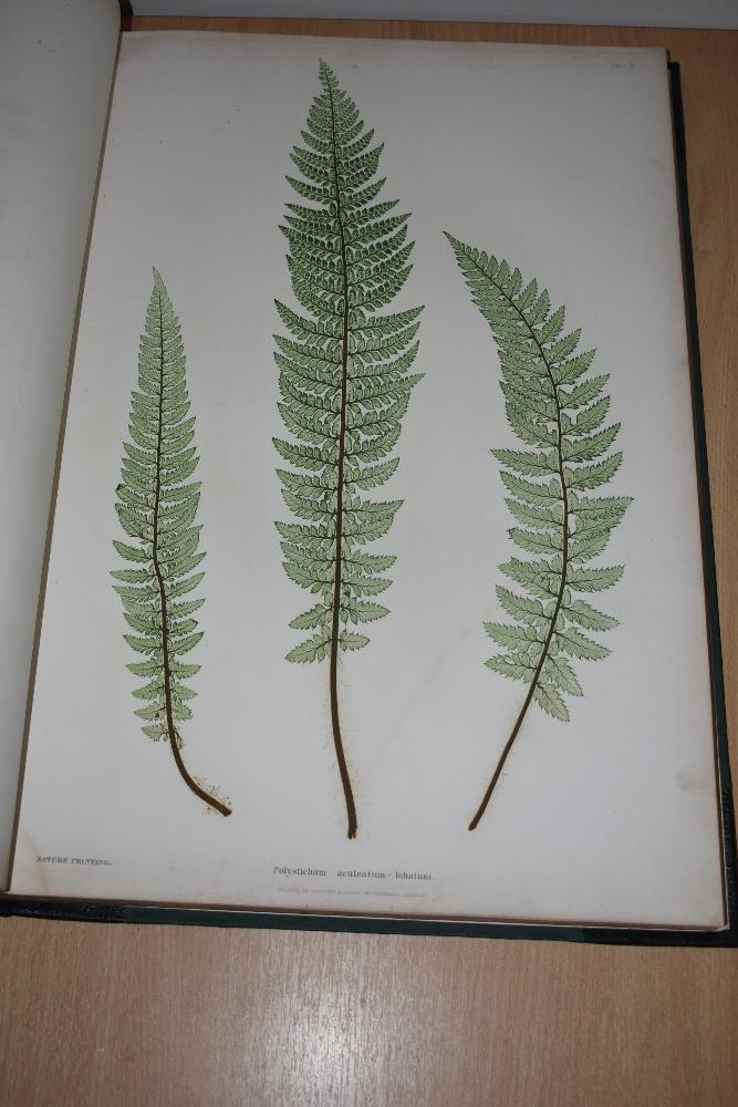 Natural History. Pteridology. Moore, Thomas; Lindley, John (ed.) - The Ferns of Great Britain and - Image 4 of 10